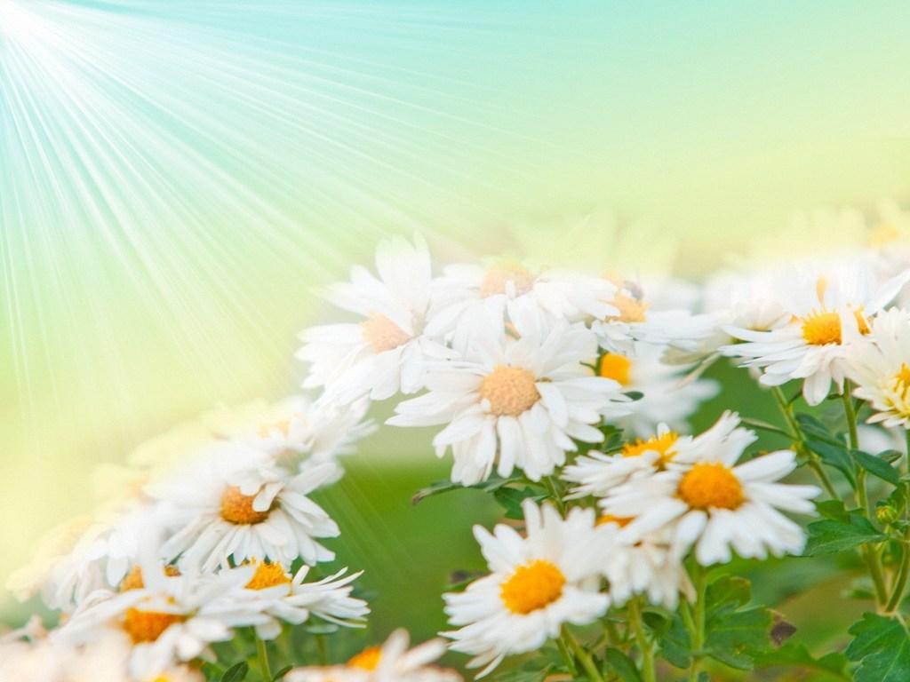 ромашки среди зеленой травы, рисунок, клипарт, скачать фото