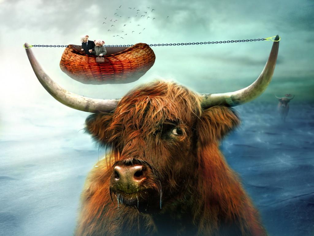 рисунок, бык, скачать фото, рога