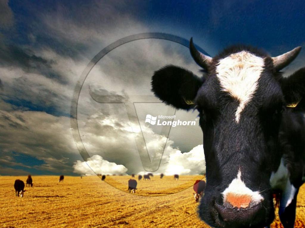 корова с белым пятном на лбу, скачать фото