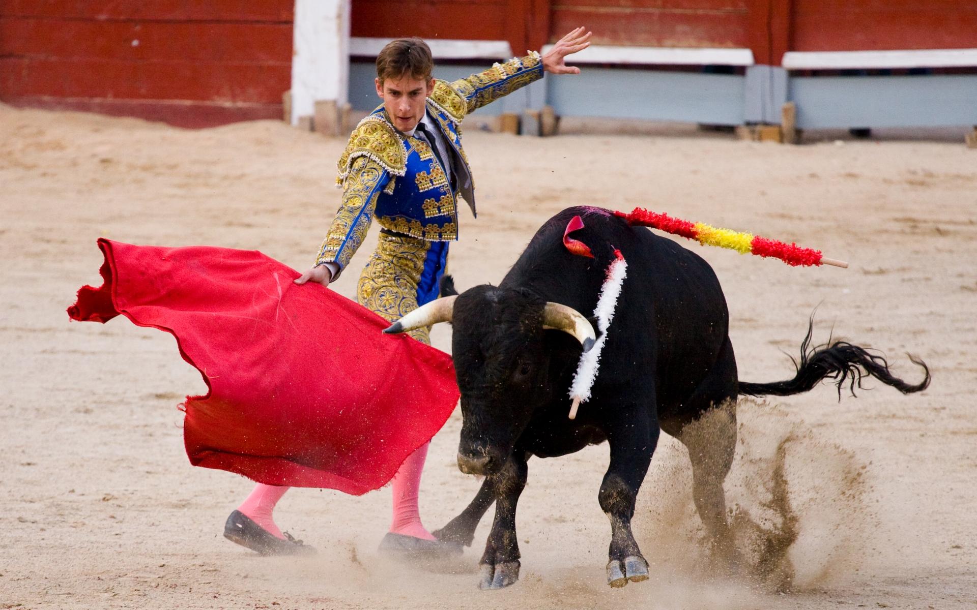 bull fighting 1920x1080 hd - photo #19