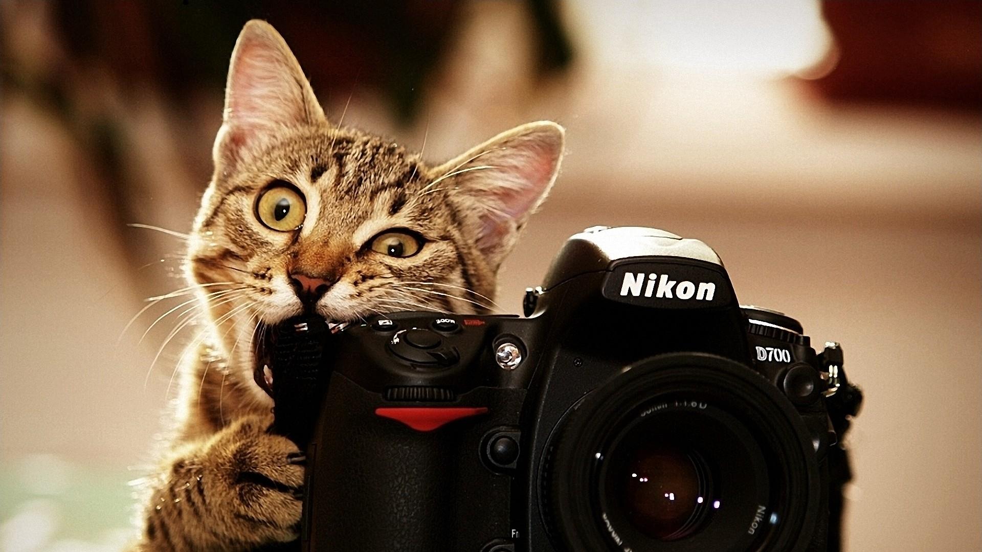 кот грызет фотоаппарат Nikon, скачать фото, обои на рабочий стол