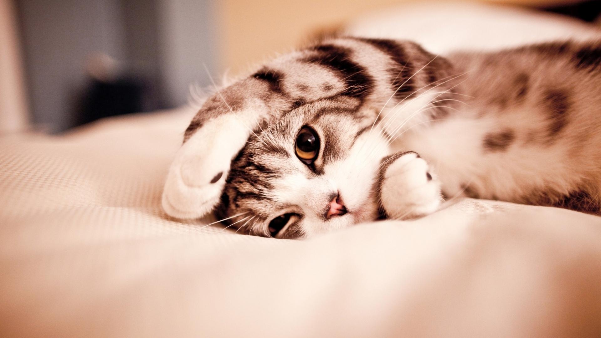 кот, кошка спит, скачать фото, обои для рабочего стола