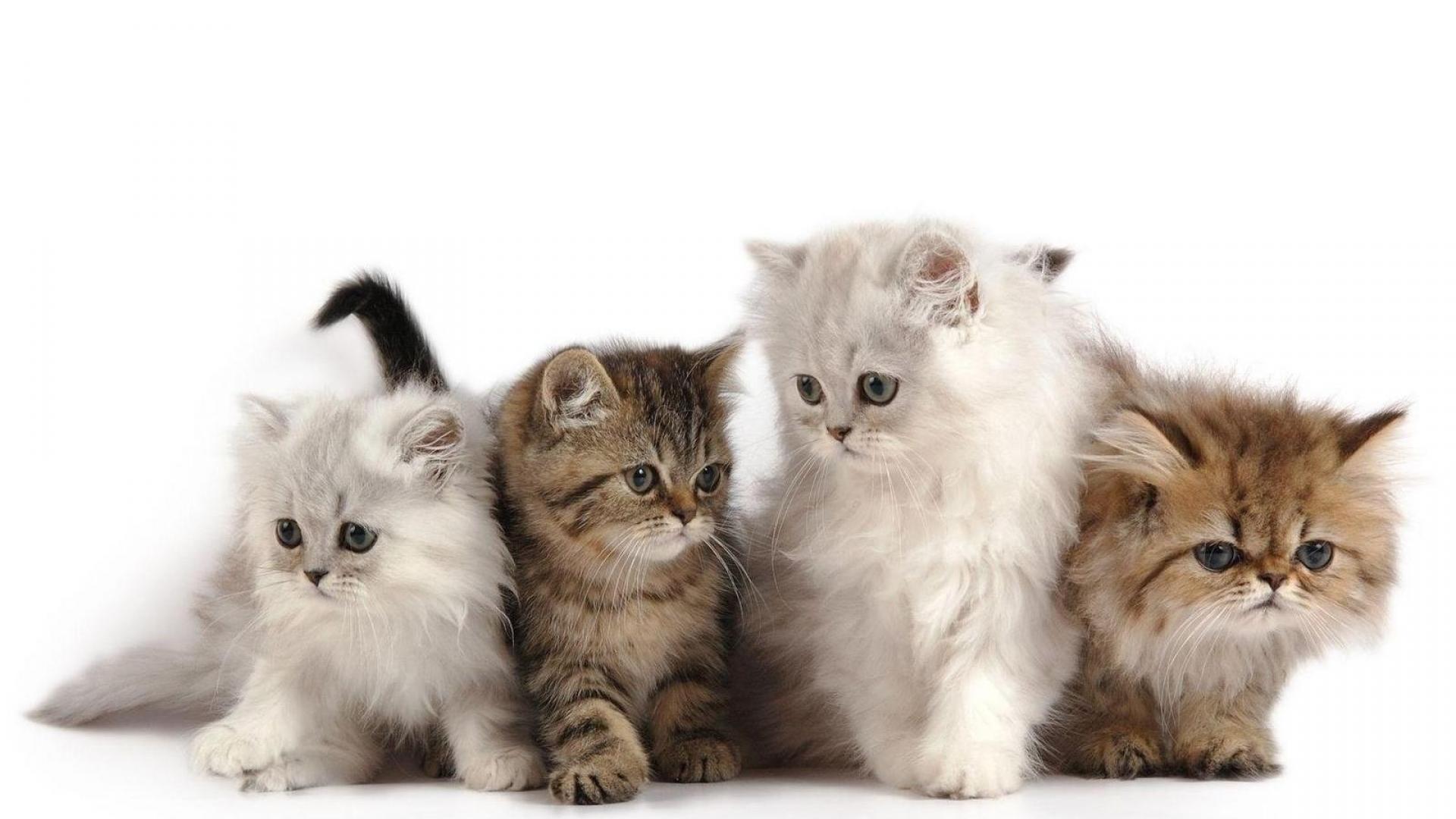 четыре разных котенка, скачать фото, обои на рабочий стол