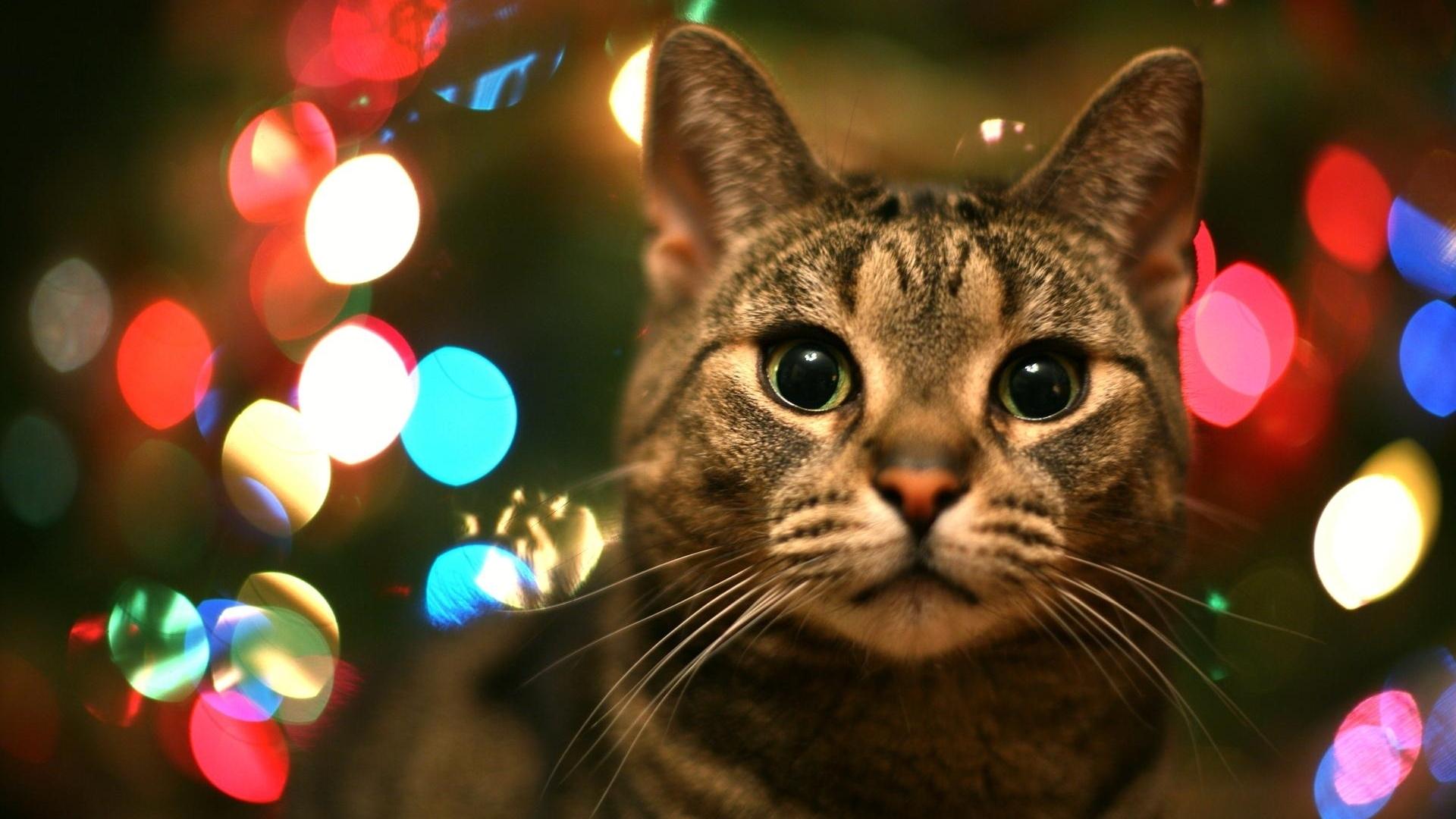 кот, кошка и блики света, скачать фото