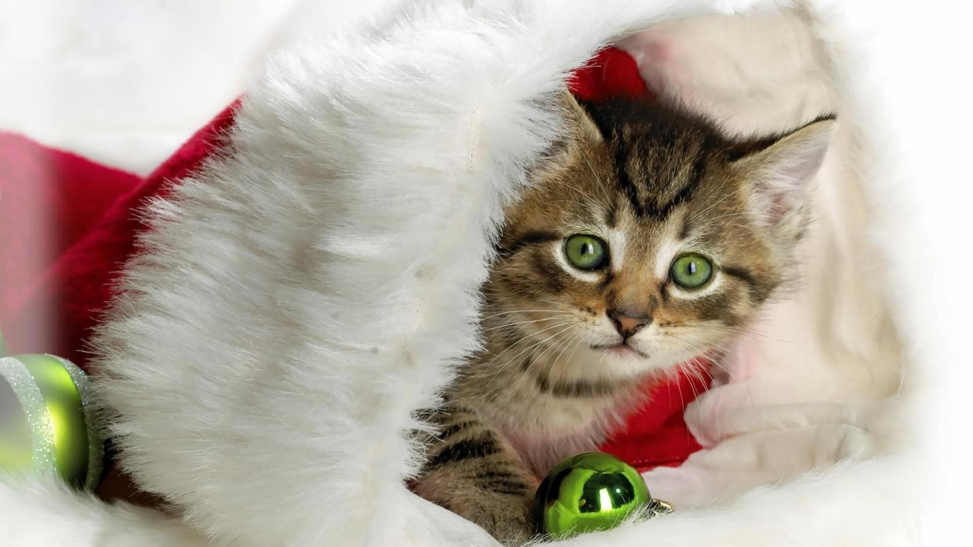 зеленоглазый котенок сидит в шапке дед мороза, скачать фото