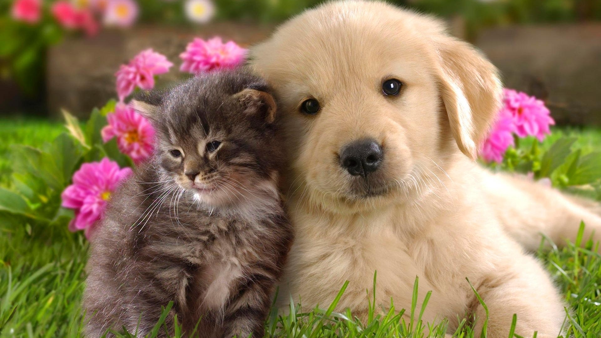 котенок и щенок сидят в обнимку, скачать фото, обои для рабочего стола