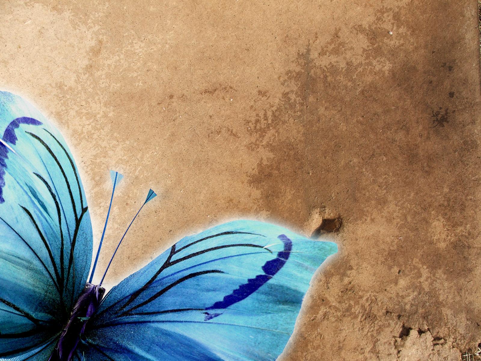 обои на рабочий стол, синяя бабочка на бумаге, скачать фото