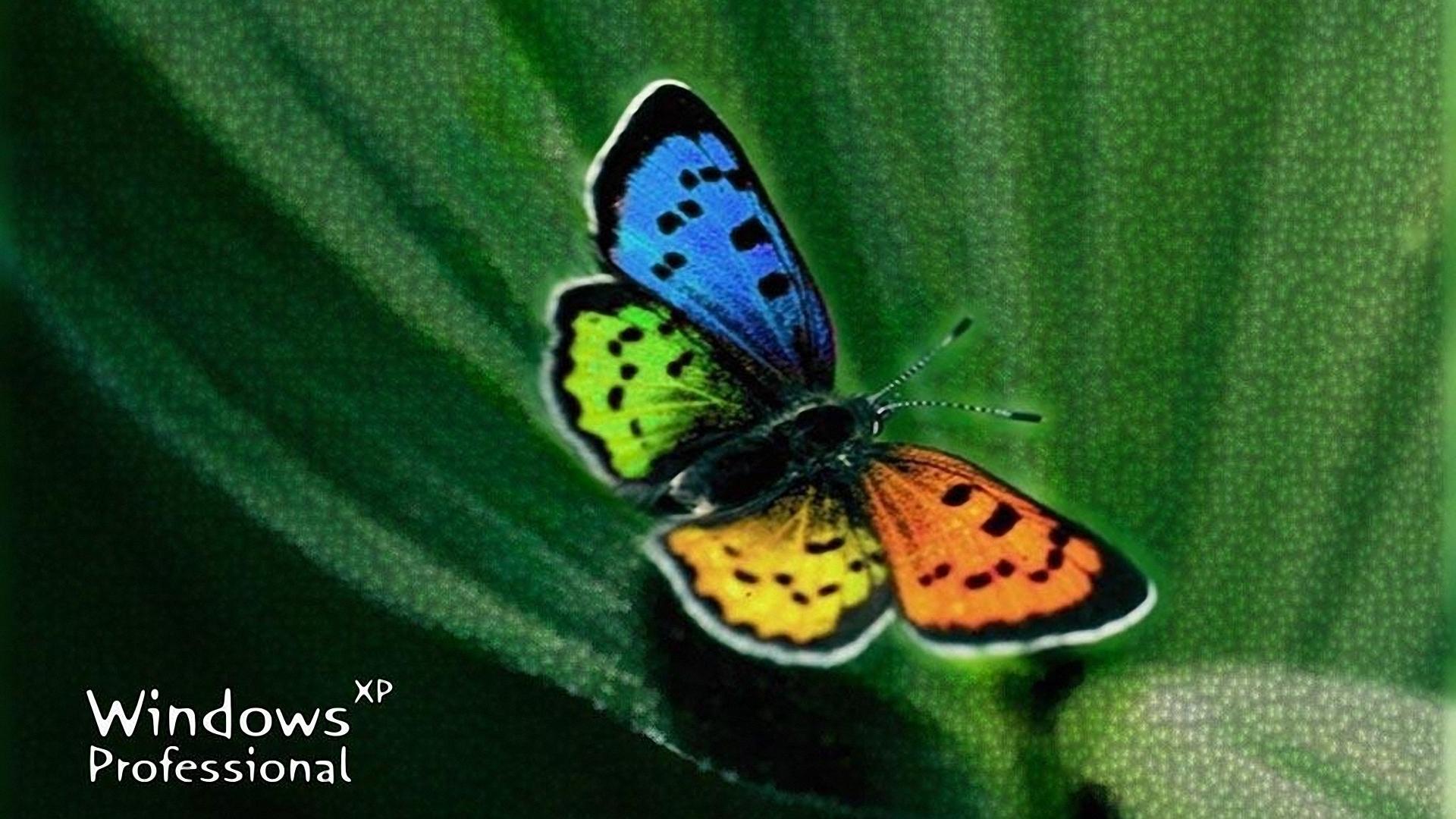 Windows XP butterfly, скачать фото, обои для рабочего стола, бабочка