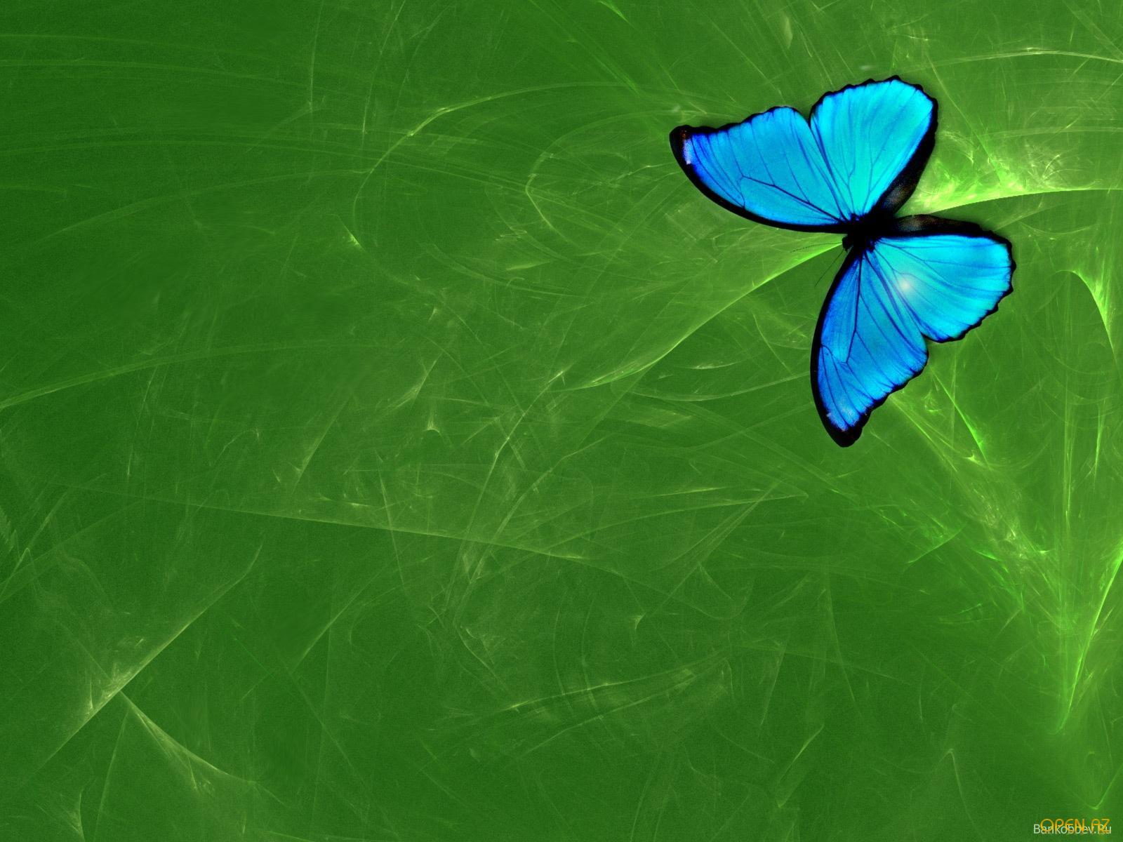 синяя бабочк ана зеленом фоне, скачать обои для рабочего стола