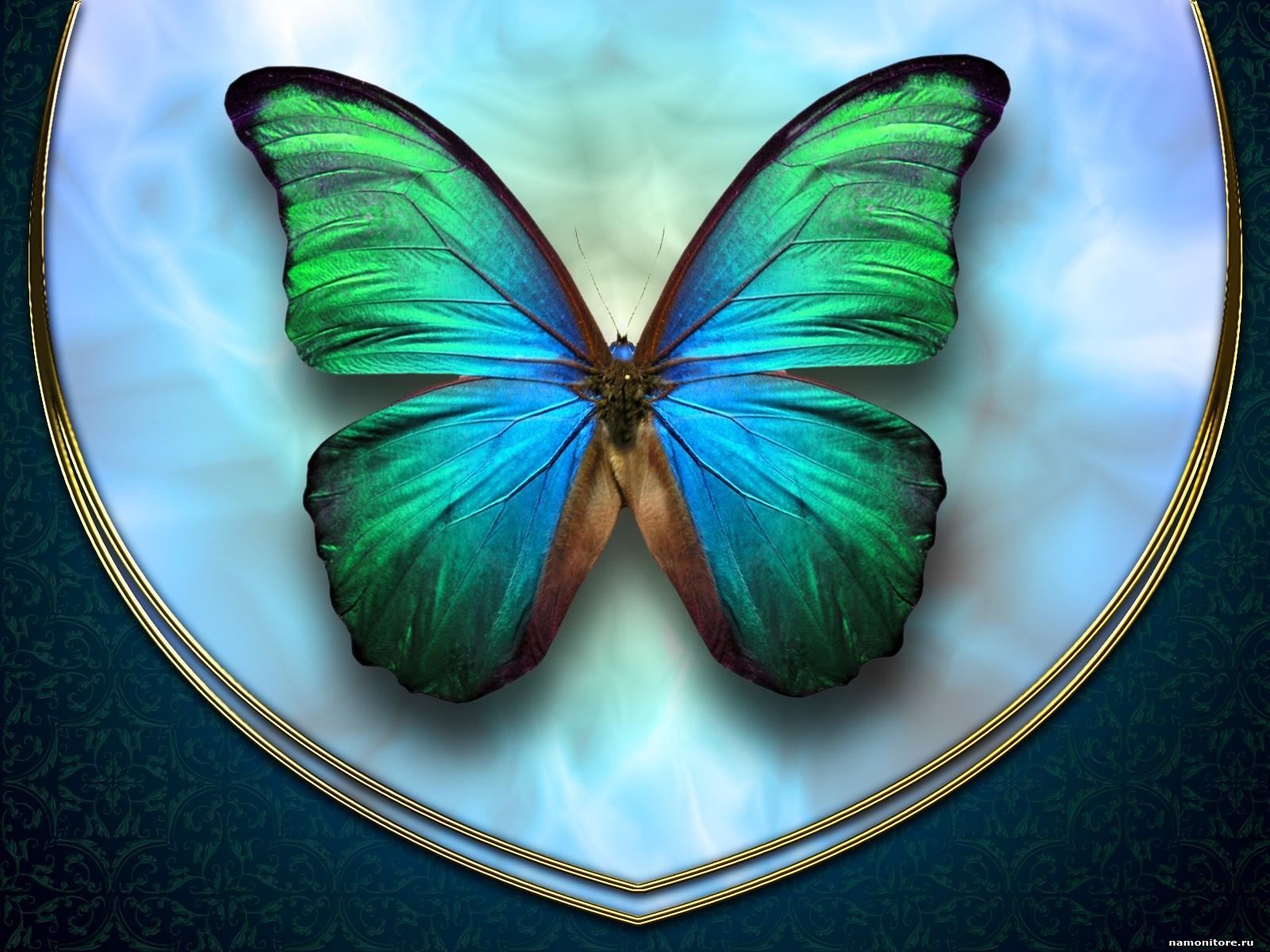 сине-зеленая бабочка, скачать фото, обои на рабочий стол