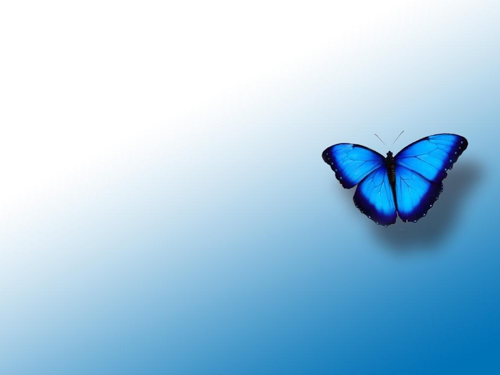 синяя бабочка на голубом фоне, скачать фото, обои на рабочий стол