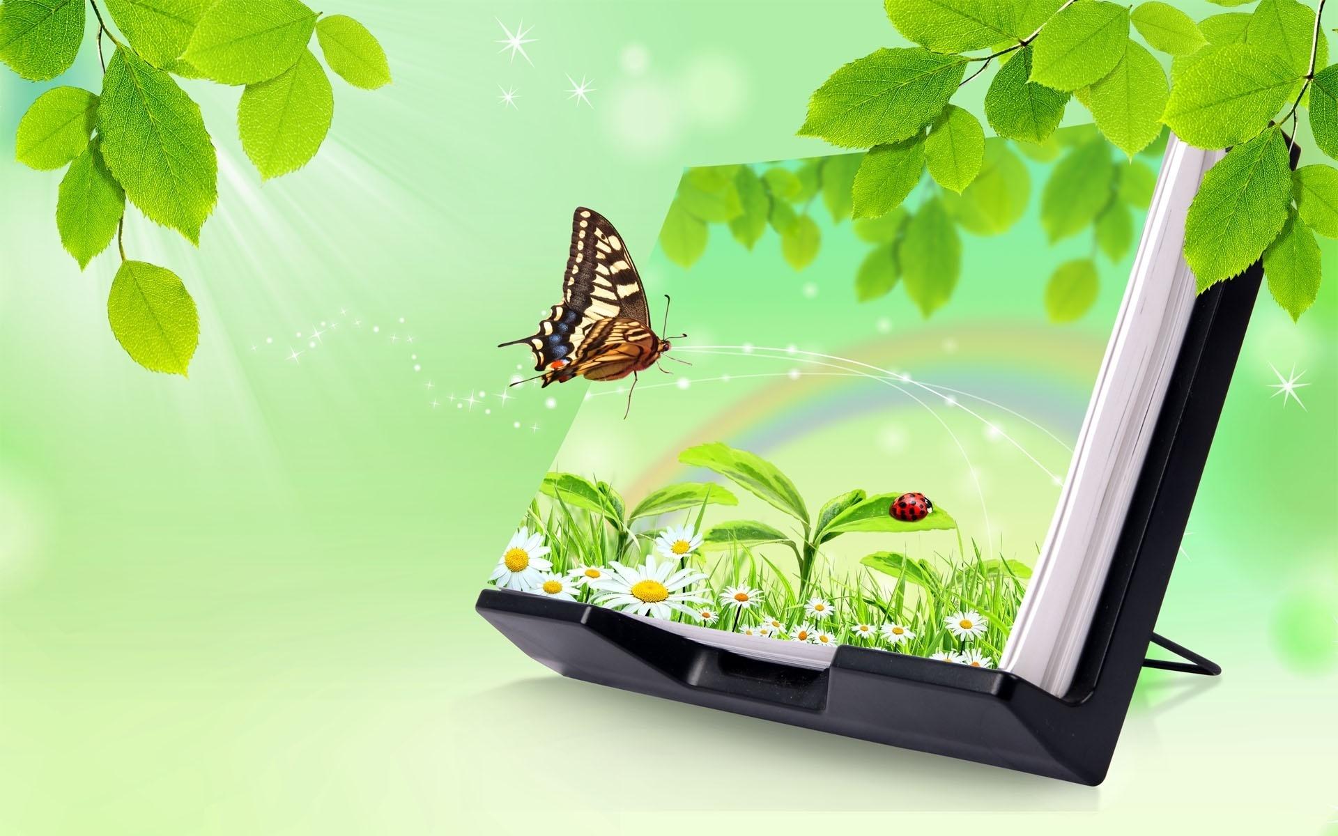 butterfly wallpaper, скачать фото, обои на рабочий стол