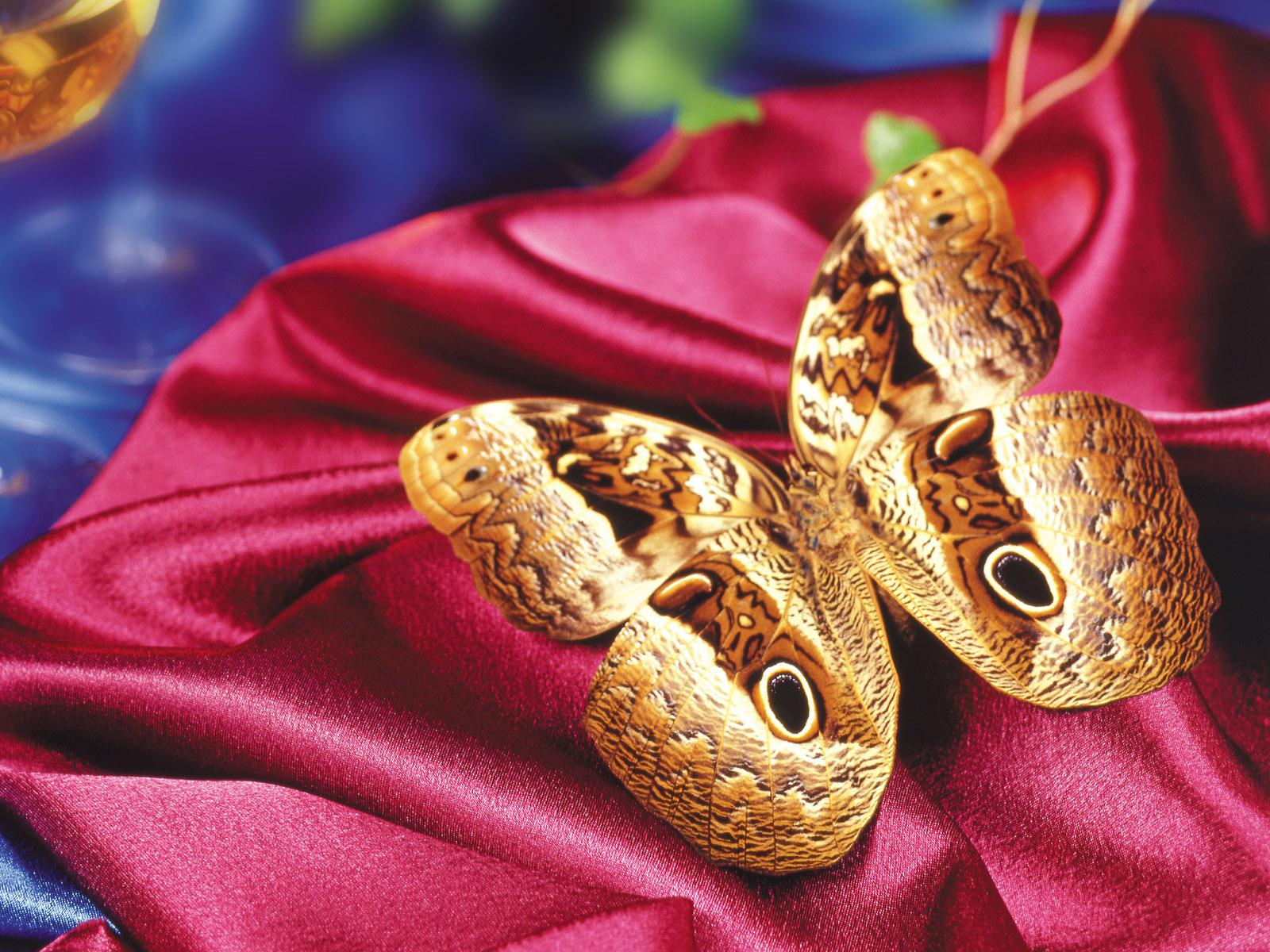 бабочка из золота на красном бархате, скачать обои на рабочий стол