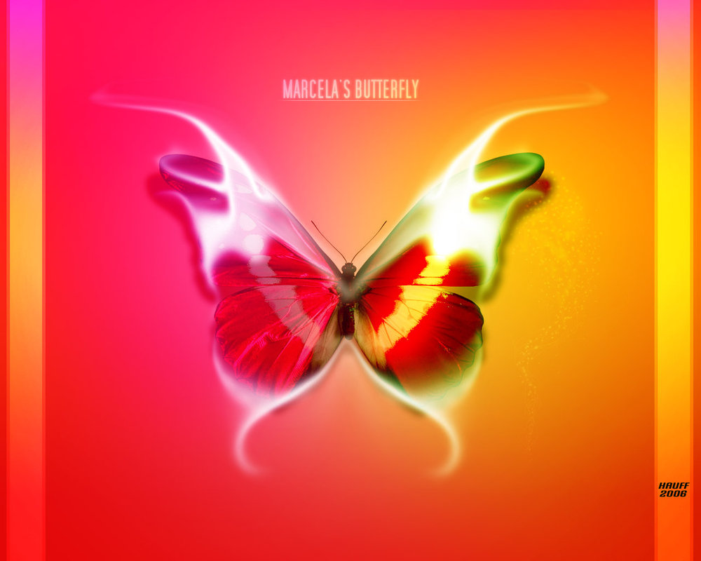 яркая бабочка на красно-оранжевом фоне, скачать фото