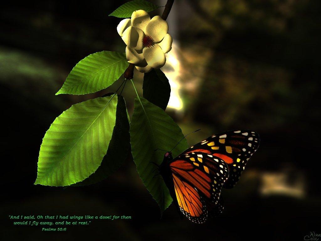красивая бабочка сидит на листке дерева, скачать фото, обои для рабочего стола