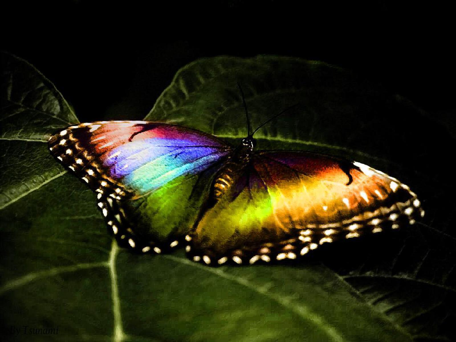 радужная красивая бабочка, скачать обои для рабочего стола, butterfly wallpaper