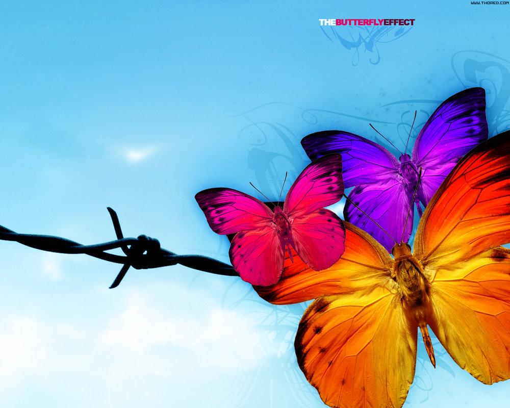 три ярких бабочки сидят на колючей проволке, скачать фото, на фоне неба