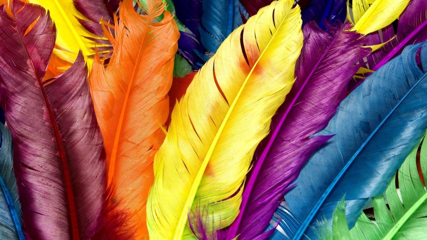 перья птиц всех цвтов радуги, скачать фото, радуга, обои для рабочего стола