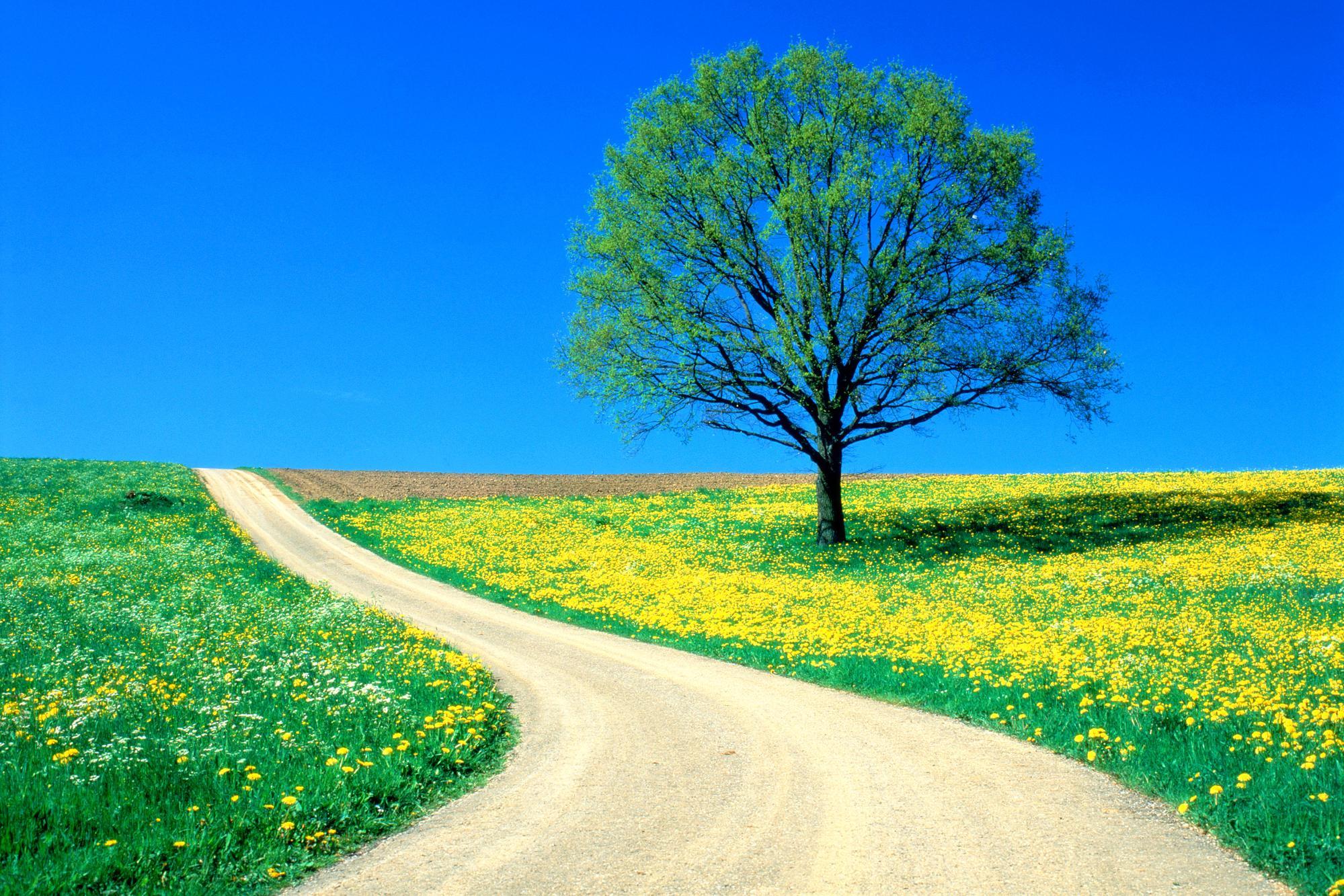 грунтовая дорога через цветущую поляну, скачать фото, дерево