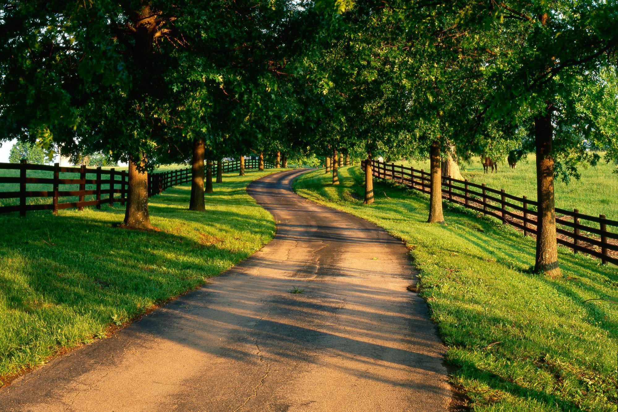 сельская грунтовая дорога среди деревьев, скачать фото, обои для рабочего стола