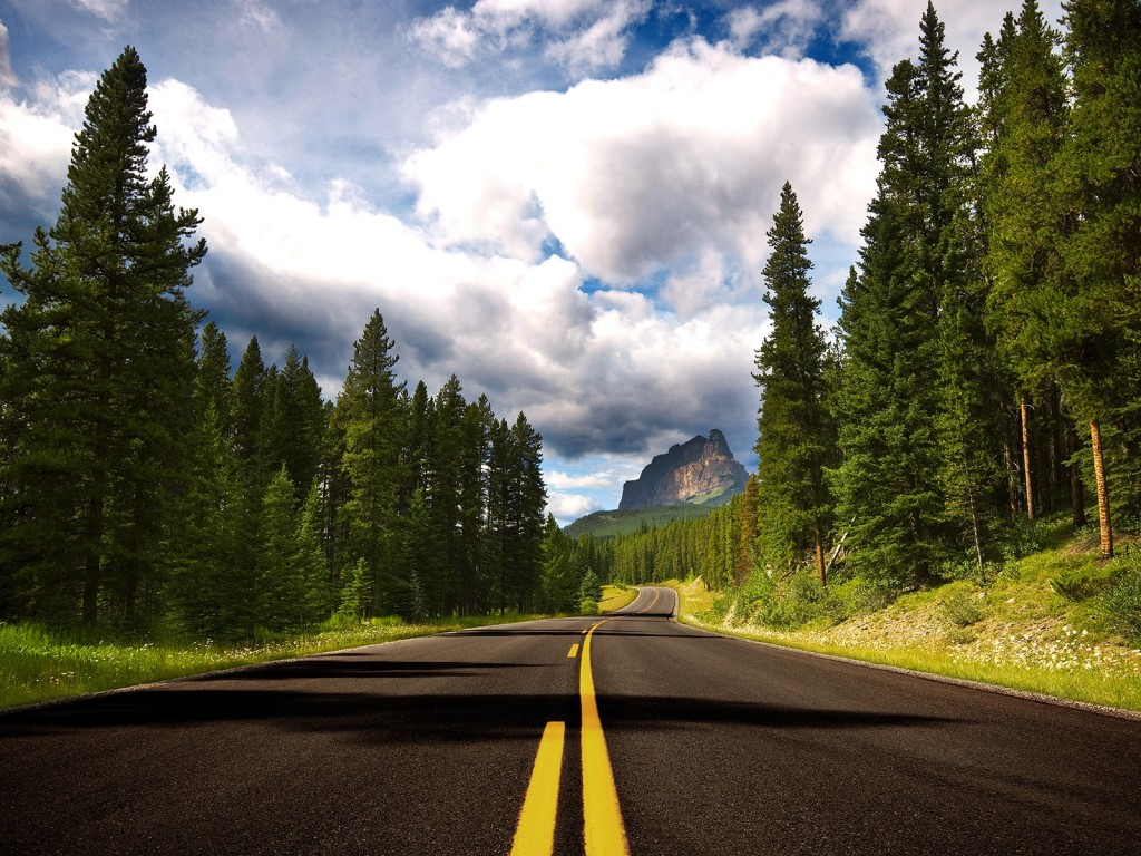 шоссе среди сосен, елки, лес, скачать фото