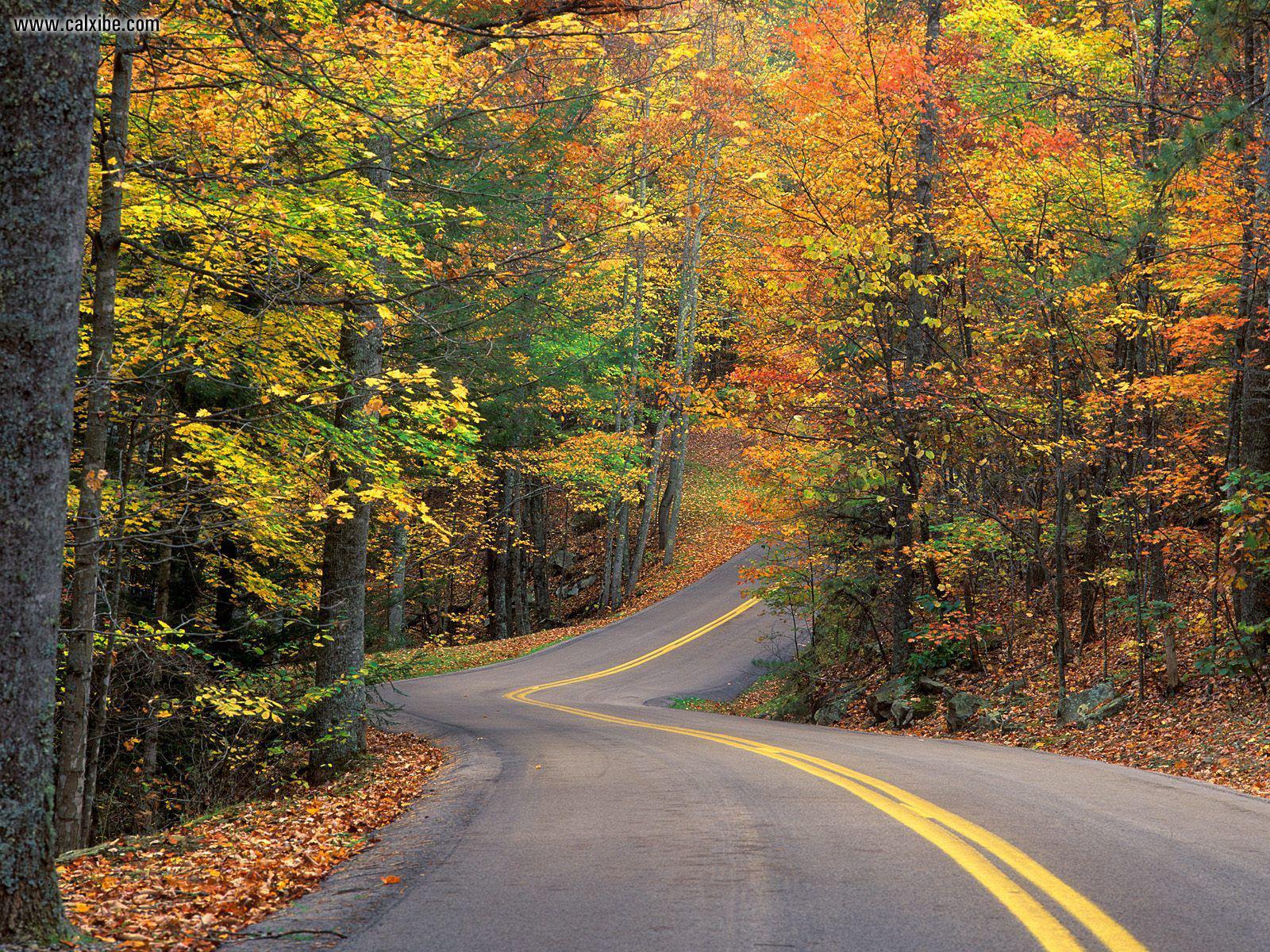 осень, извилистая дорога, скачать фото, желтые листья