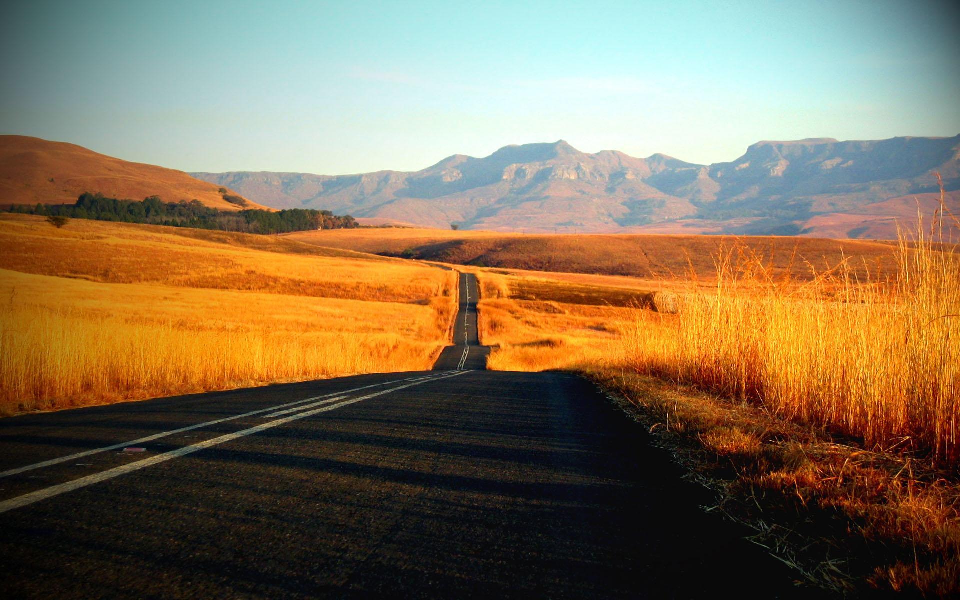асфальт, дорога, желтая трава, высохшая трава, скачать фото