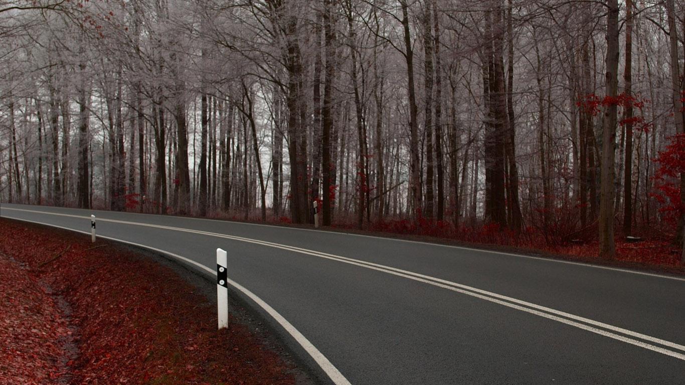 осень поздняя, голые деревья, скачать фото, дорога, обои для рабочего стола