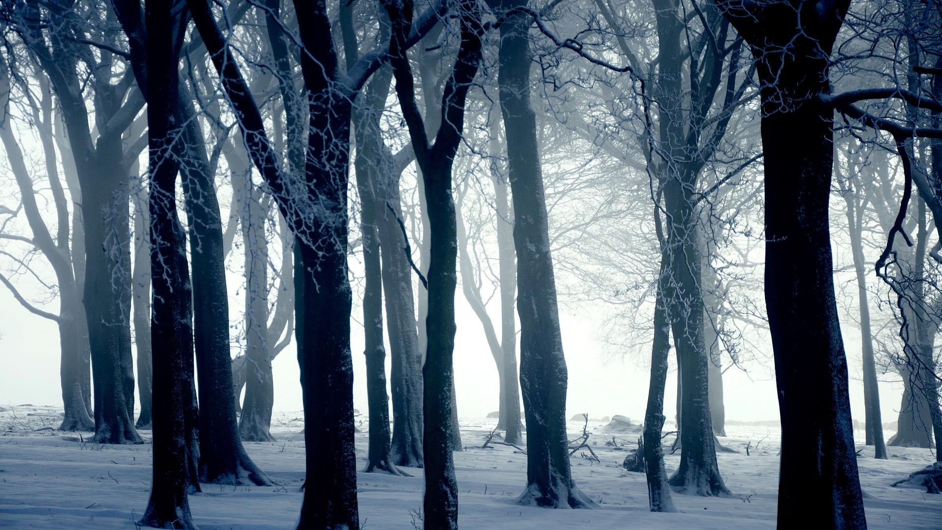 Зимний лес, свтолы деревьев, скачать фото, обои для рабочего стола, зима, обои для рабочего стола
