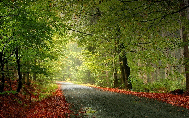 осень, лес, скачать обои на рабочий стол, деревья