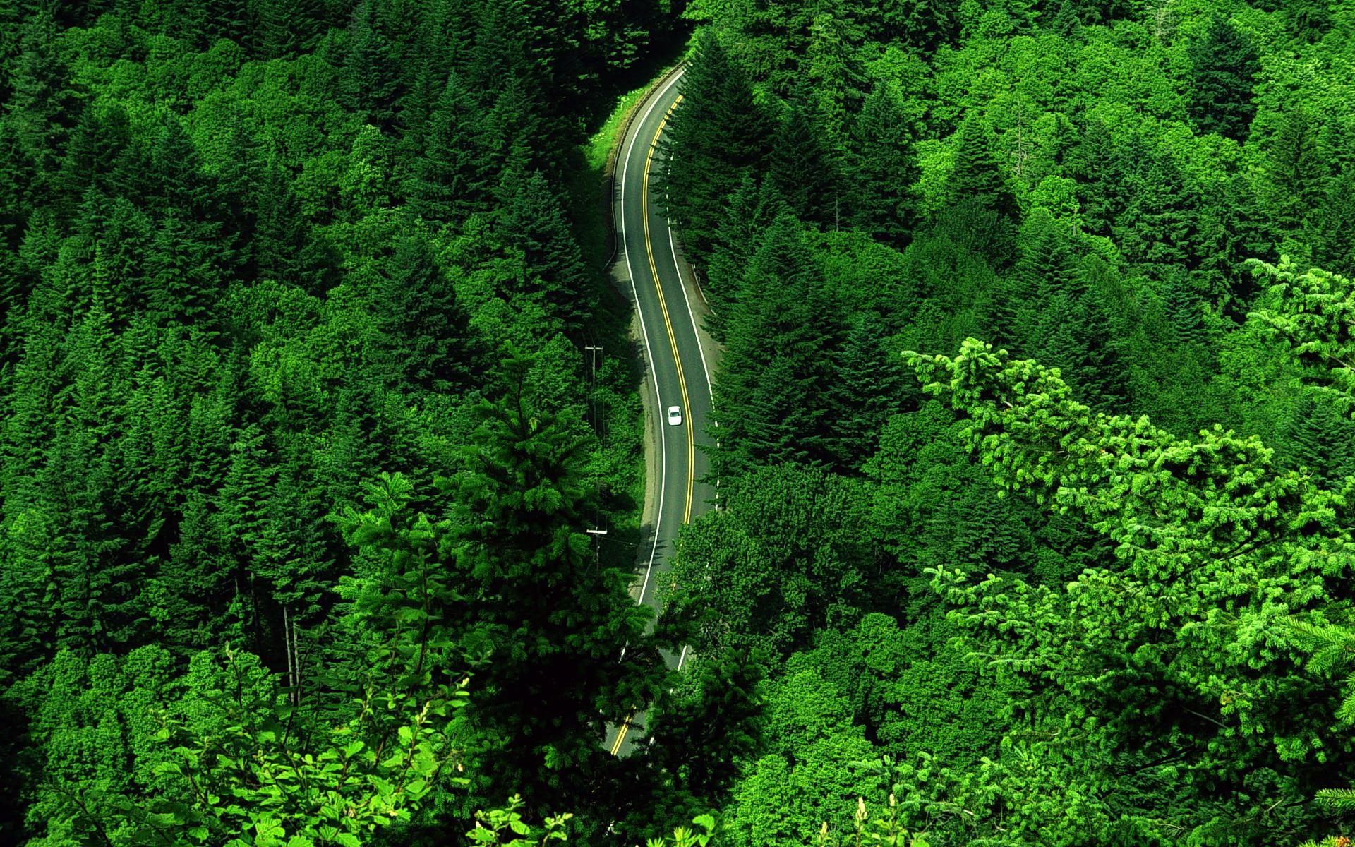 шоссе, дорога через лес, скачать фото, зелень, зеленые деревья, обои для рабочего стола