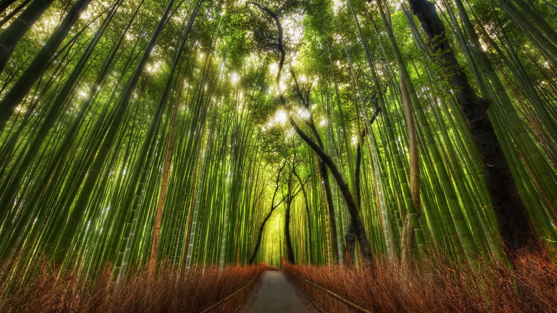 густой лес, красивое фото, обои для рабочего стола, скачать бесплатно