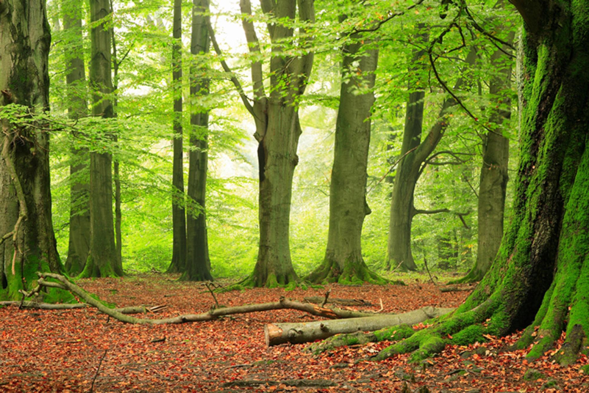 лес, опавшие листья, скачать фото, обои на рабочий стол