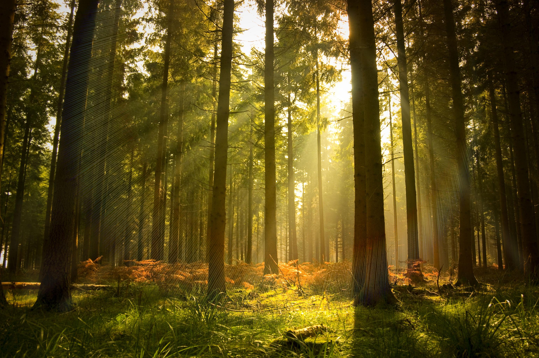 Лес солнечный свет скачать фото обои