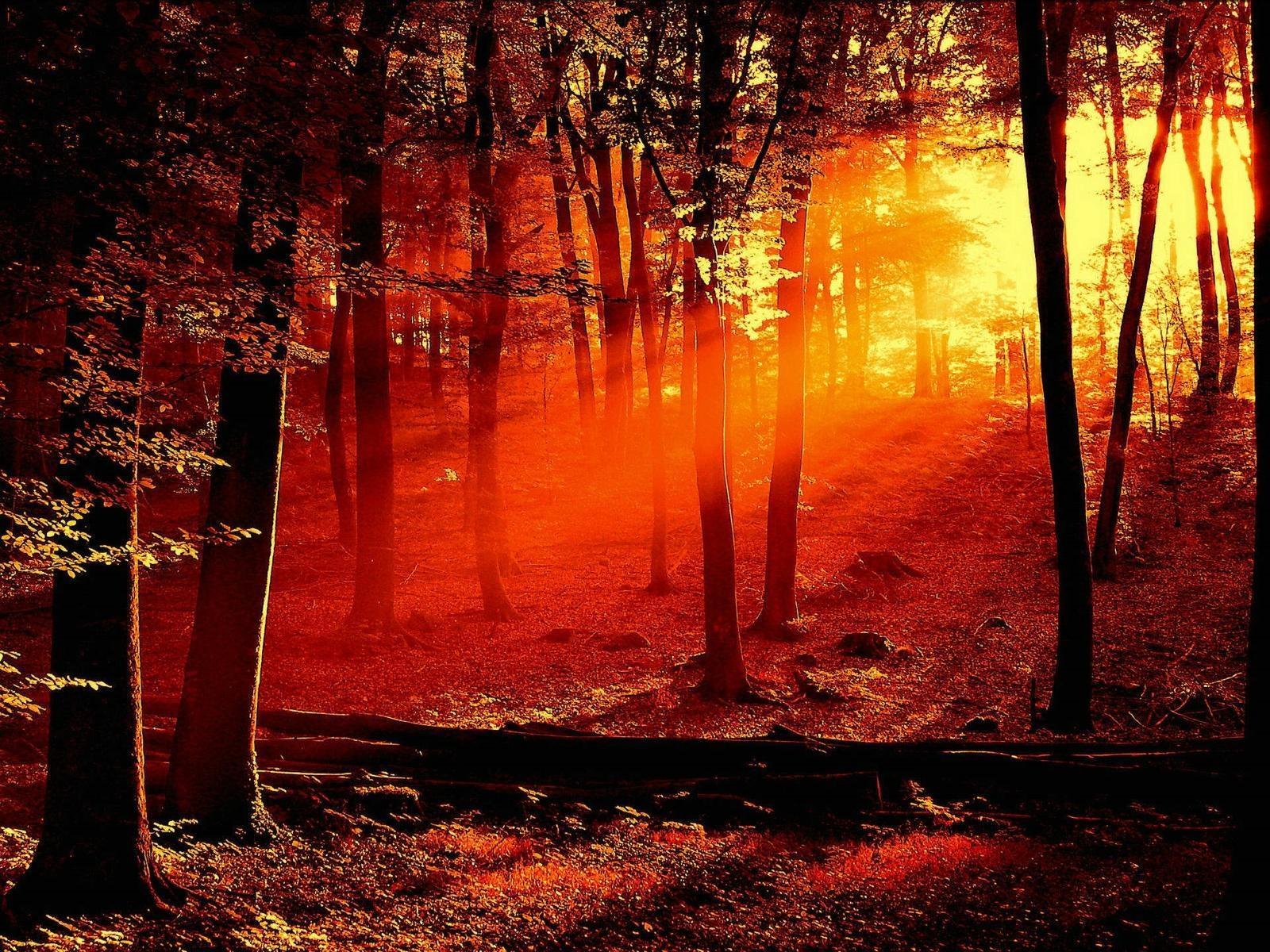 осенний лес, красный свет, деревья, обои для рабочего стола, скачать бесплатно