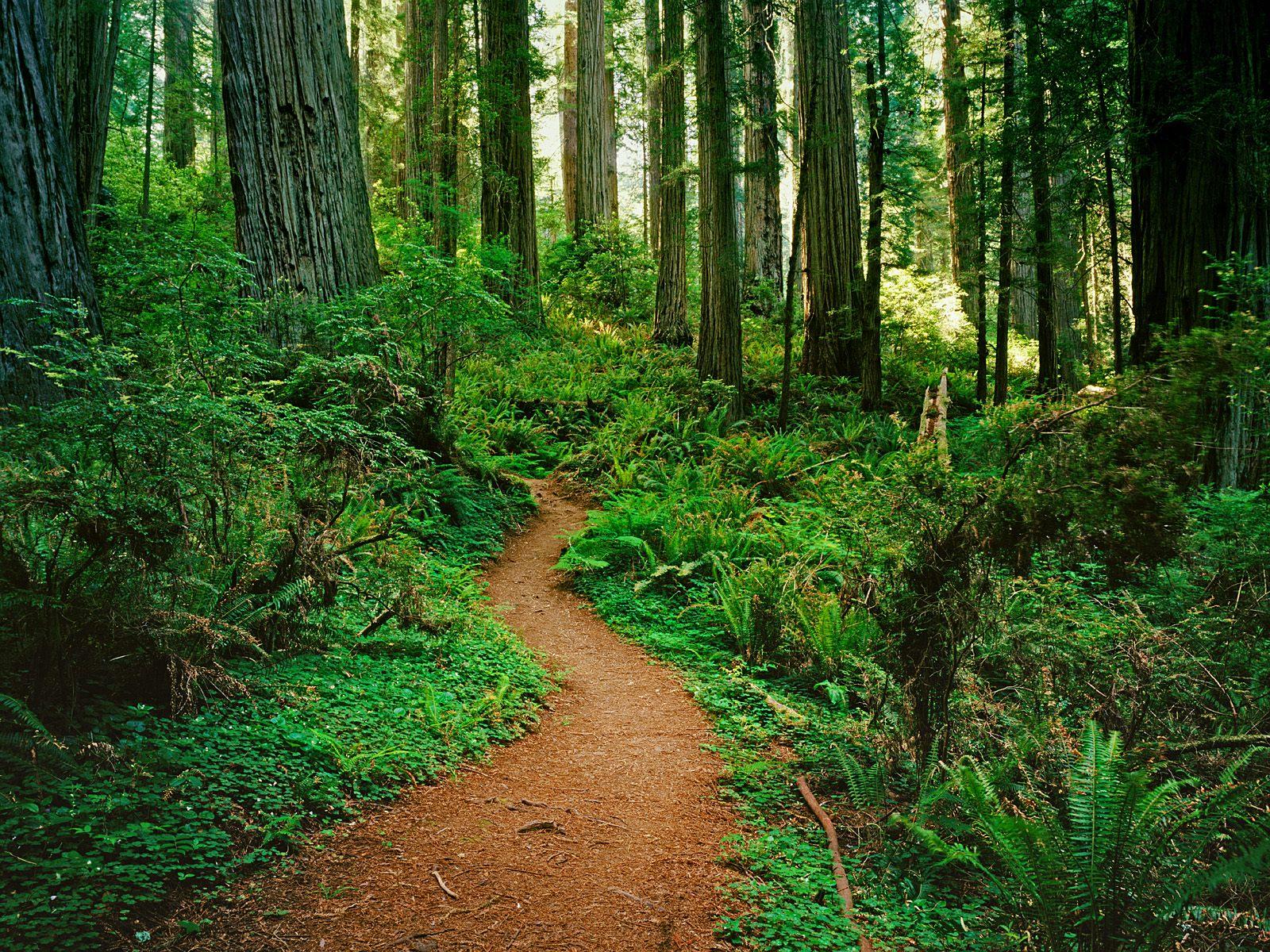 тропинка в зеленом лесу, скачать фото, обои на рабочий стол, зелень, трава, кусты