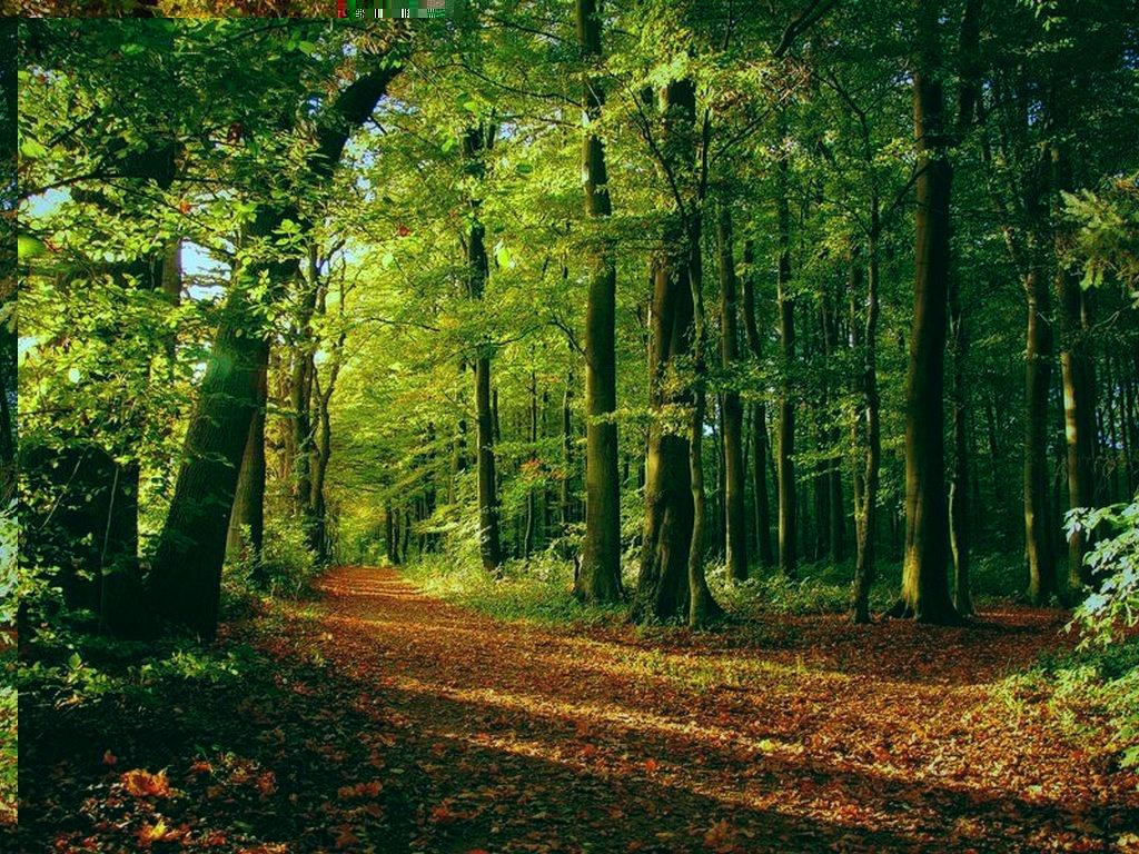 картинки для рабочего стола лес: