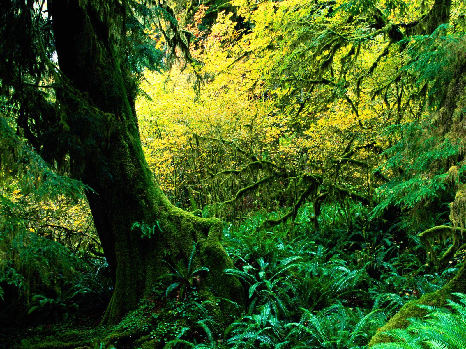 зеленый лес, толстое дерево, скачать фото