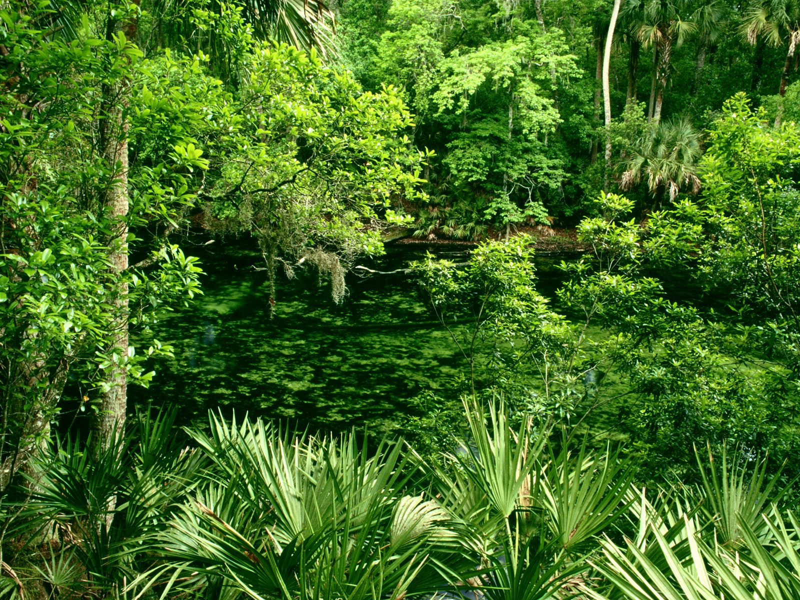лес, обои, зеленые кусты, трава и деревья