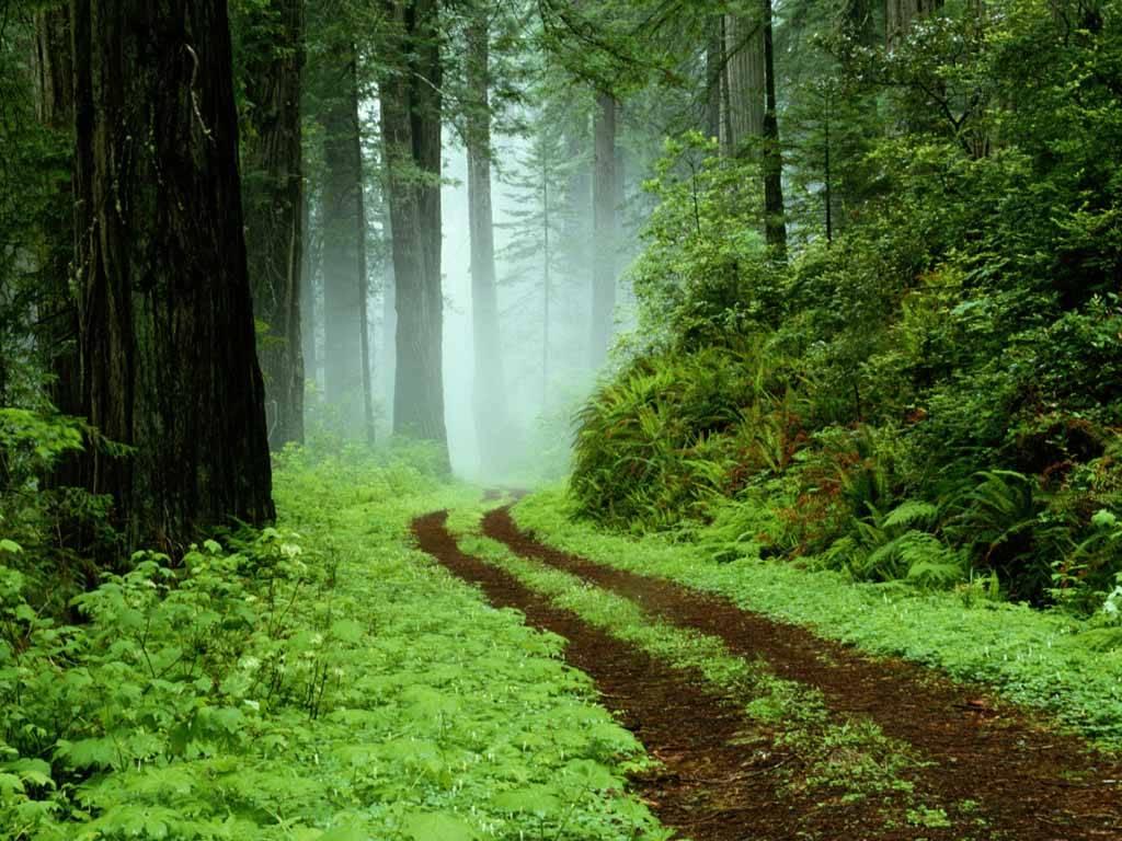 дорога в зеленом лесу, дымка, скачать обои для рабочего стола, зеленая трава в лесу