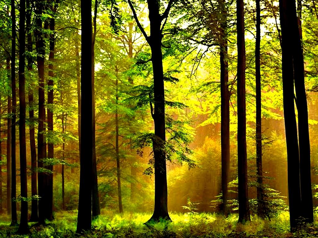 обои для рабочего стола, лес, стволы деревьев, свет, скачать фото