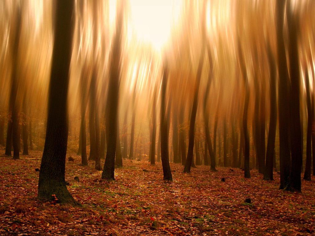 осенний лес, скачать фото, стовлы деревьев, обои на рабочий стол