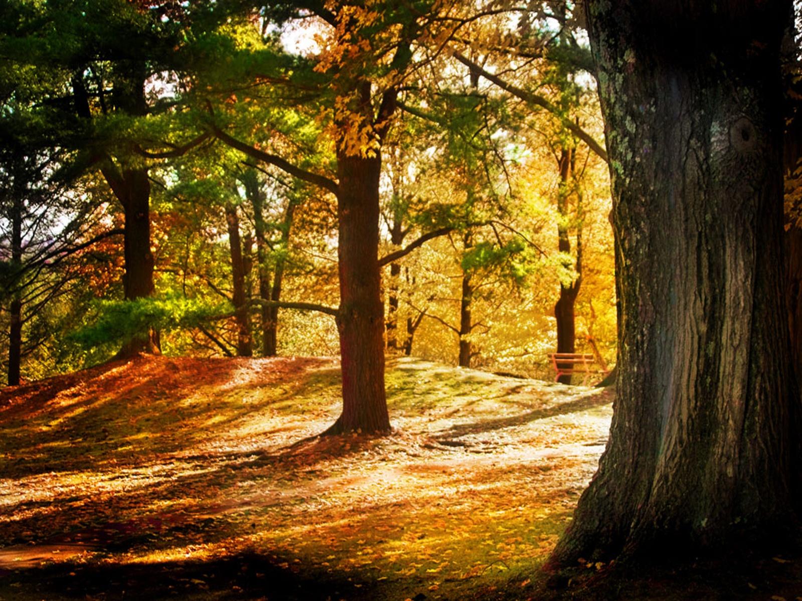 лес, стволы деревьев, скачать фото, солнечный свет, листья