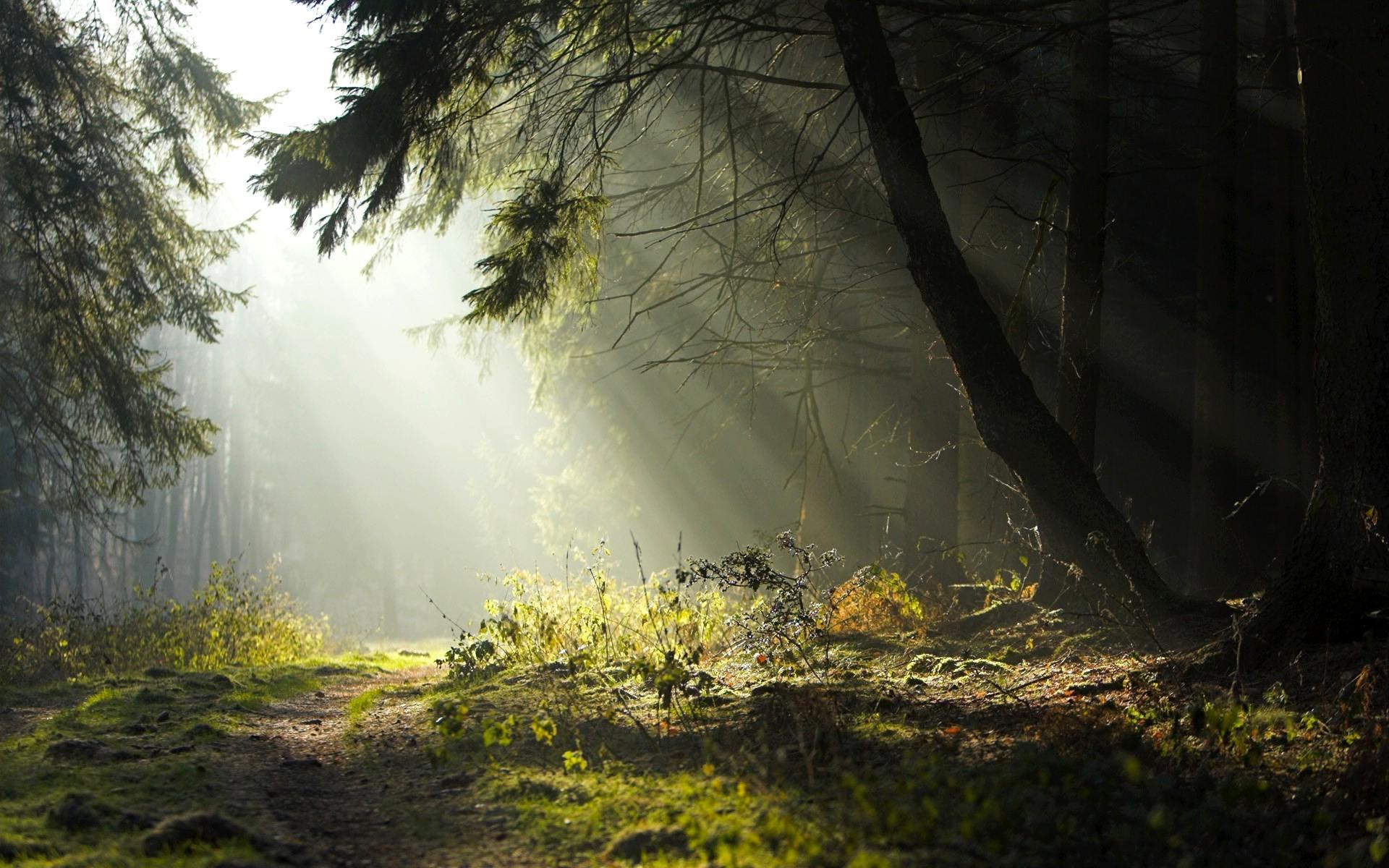 дымчатый лес, лес, дымка, скачать обои на рабочий стол
