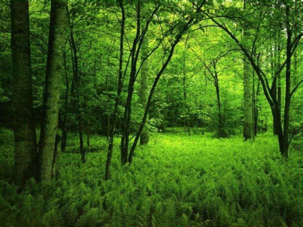 изумрудно-зеленый лес, скачать фото, деревья, трава, кусты, обои на рабочий стол