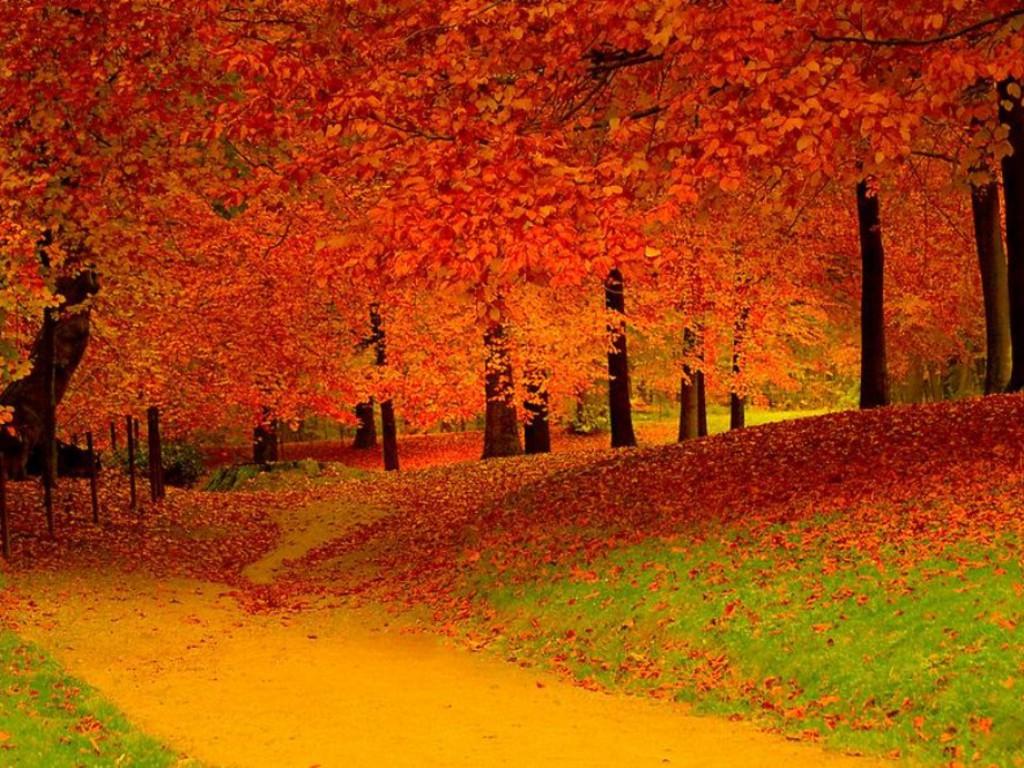 листопад, осень, лес, скачать фото бесплатно, осенний лес, опавшие листья
