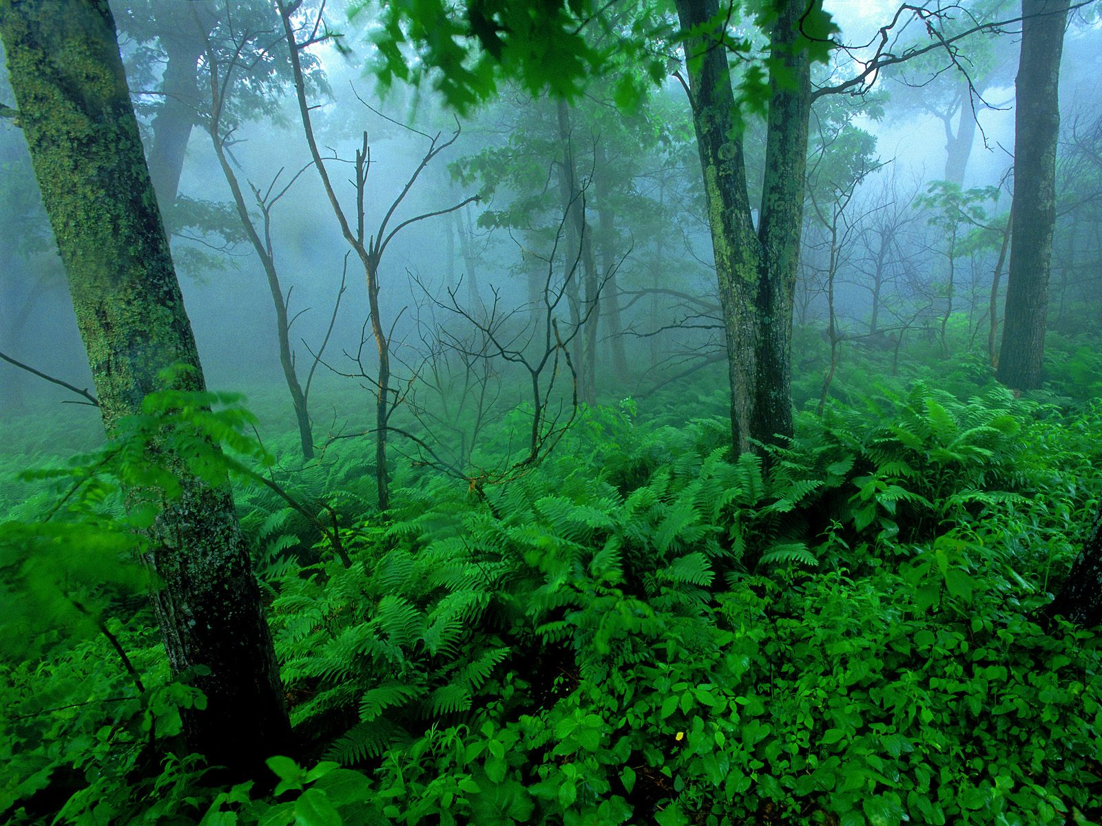 зеленый лес, скачать фото, стволы деревьев, зелень