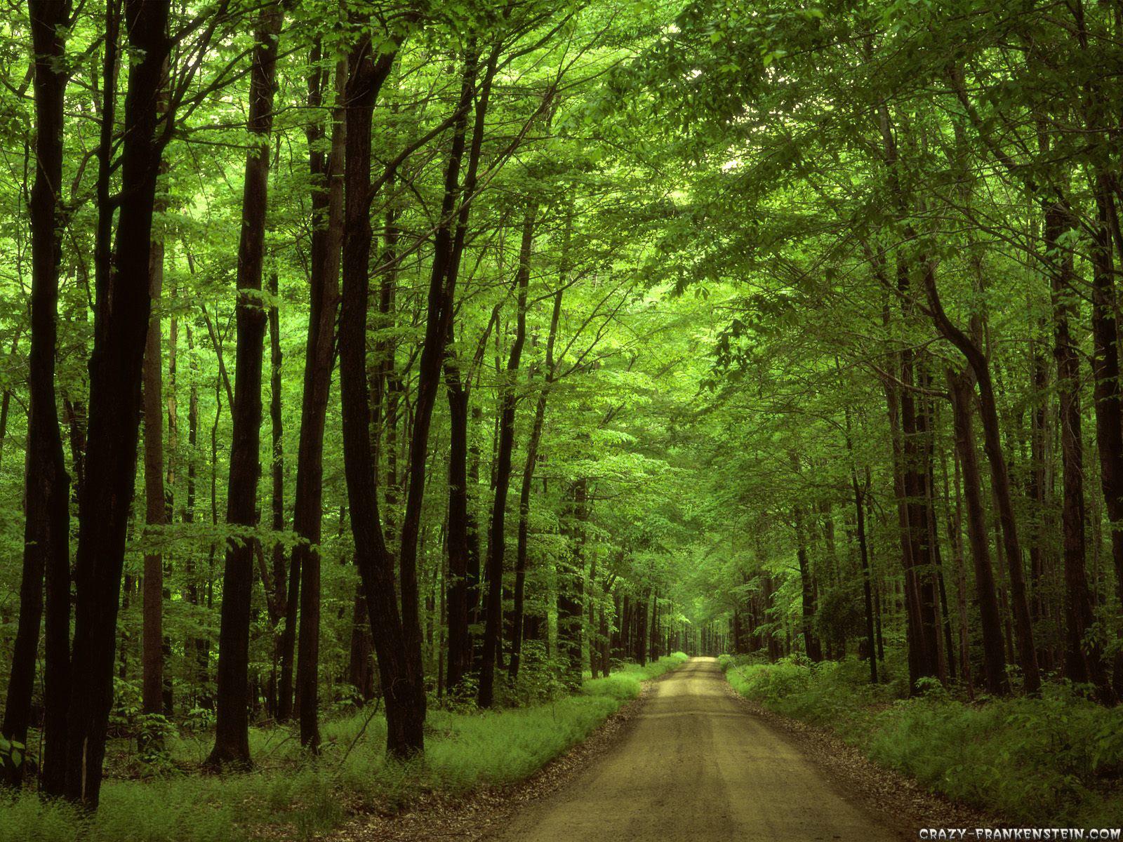 дорожка сред леса, просека, скачать фото, лес, деревья