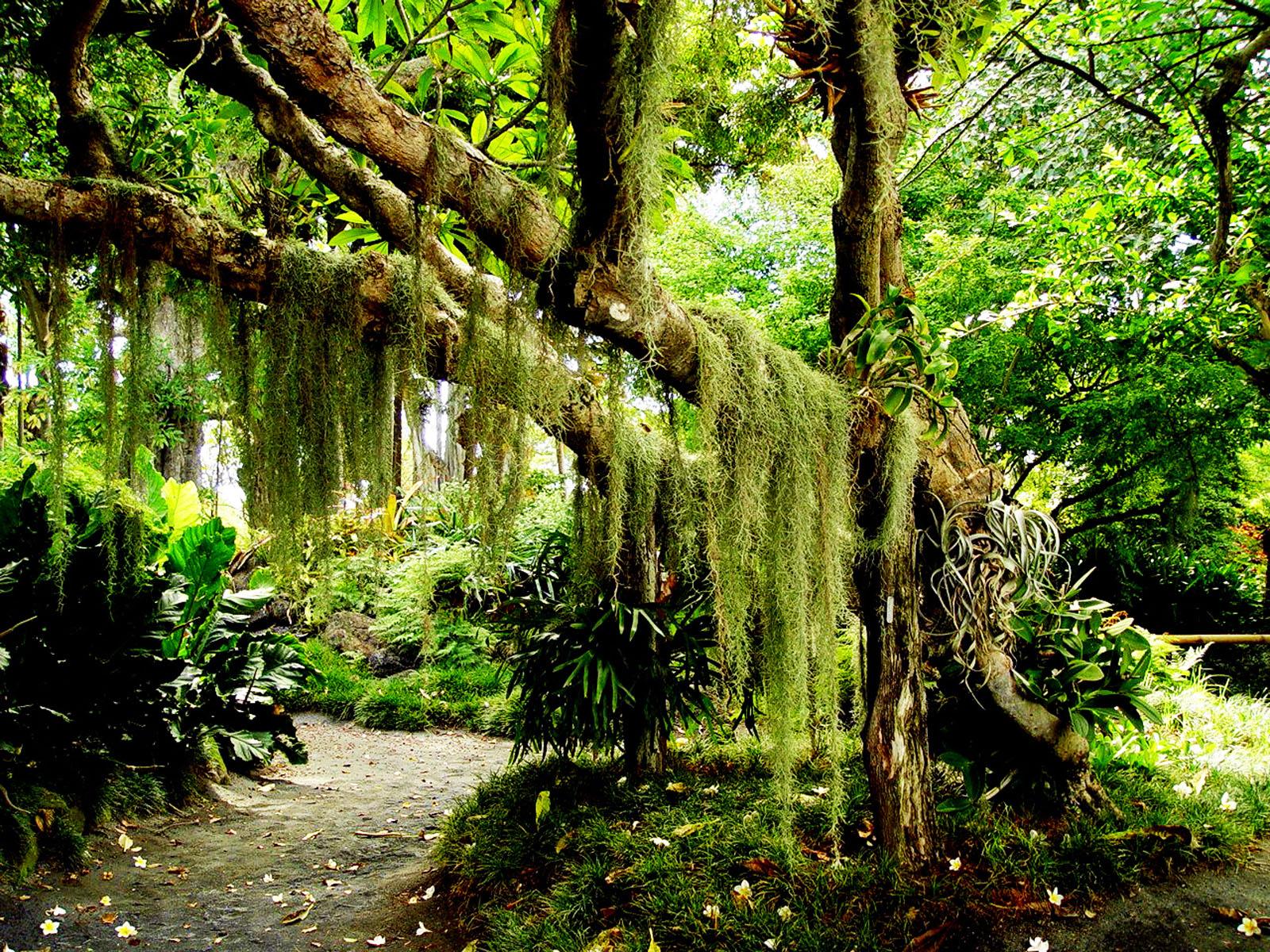 лес, мох на дереве, скачать фото, обои для рабочего стола, мощное дерево