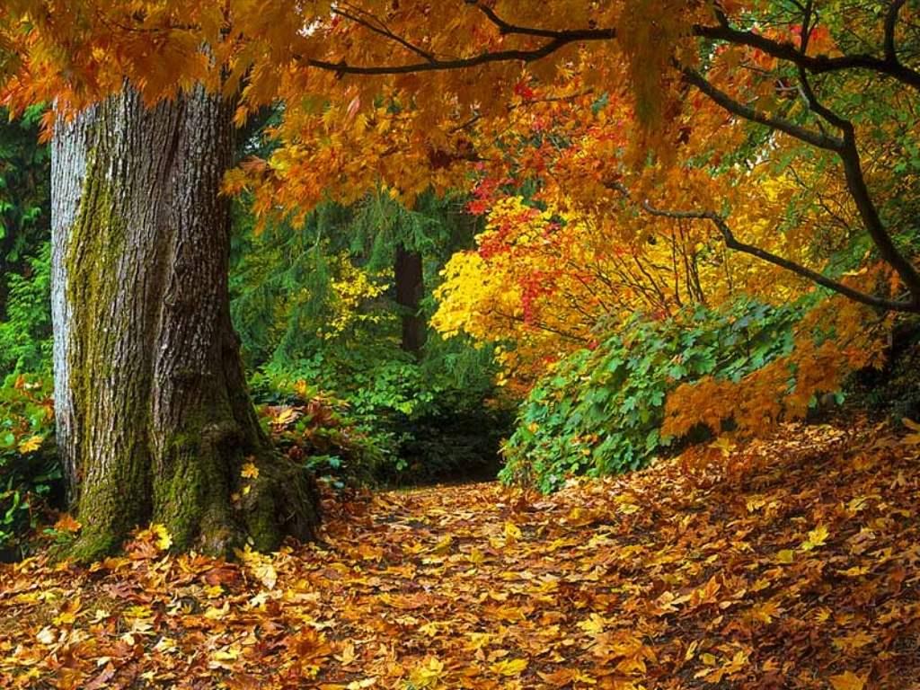 осень, дерево, скачать фото, опавшие листья, лес